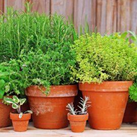 پک گیاهان دارویی